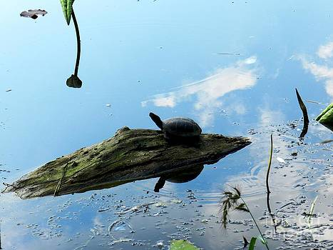 A turtle warming up by Olga R