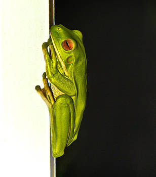 A Visit from a Giant tree Frog by Debbie Cundy