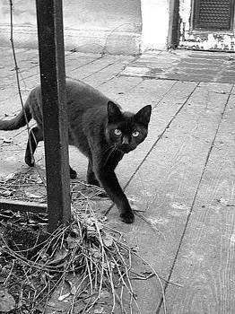 A Visitor by Emilija Cerovic