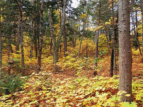 A walk in the woods 1 by Pema Hou