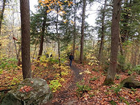 A walk in the woods 3 by Pema Hou