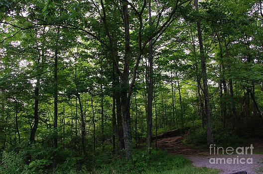 A Walk in the Woods by Gwendolyne Allen