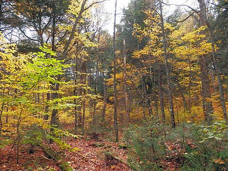 A walk in the woods by Pema Hou