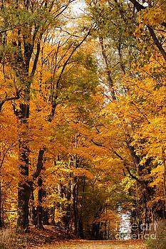 Linda Knorr Shafer - A Walk Through Autumn