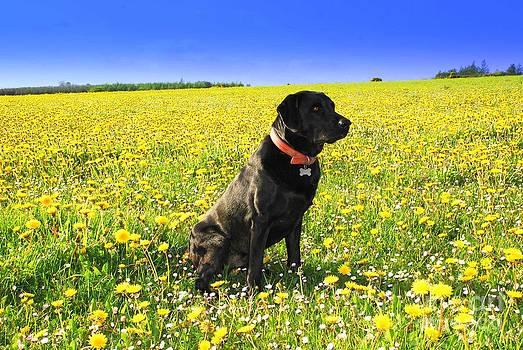 Joe Cashin - A well behaved dog