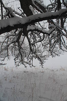 A Winter Tree View by Alicia Knust