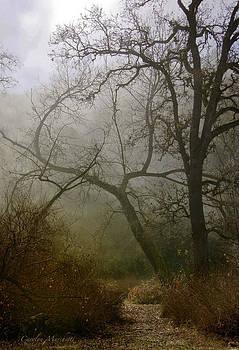 A Winters Path  by Carolyn Marchetti