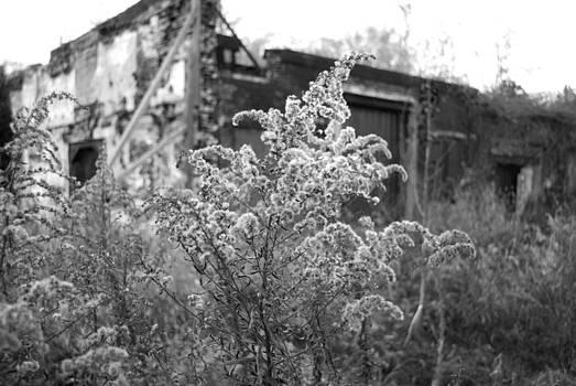 Abandoned by Gina Patton