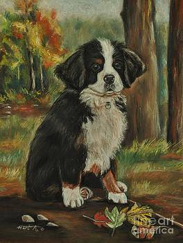 Abby - Bernese Mountain Dog by Heather Kertzer