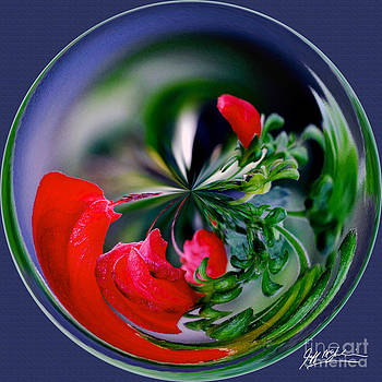 Jeff McJunkin - Abstract Flower Orb II