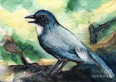 Ac203 Blue Bird by Kirohan Art