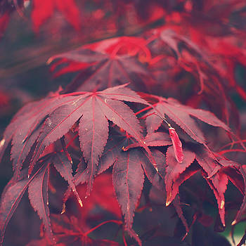 Acer by Patrick Horgan
