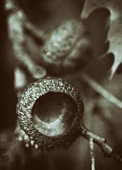 Acorns by Heather Bridenstine