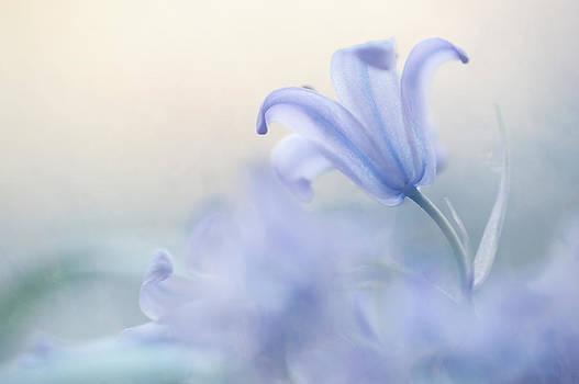 Jenny Rainbow - Aethereal Blue