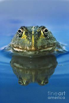Frans Lanting MINT Images - African Bullfrog