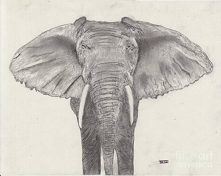 African Elephant by David Jackson
