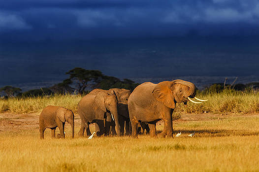 African Elephant Herd by Maggy Meyer