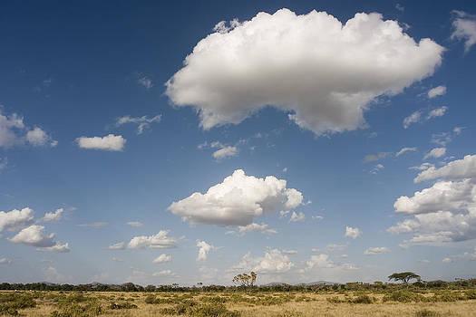 African Landscape by Antonio Jorge Nunes