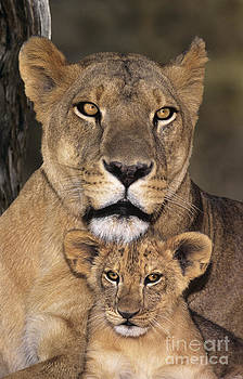 Dave Welling - African Lions Parenthood Wildlife Rescue