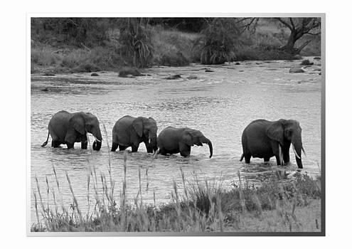 Jeff Brunton - African Safari Elephants 6