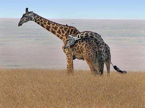 Jeff Brunton - African Safari Giraffes 4