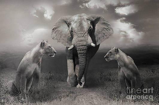 African scenery by Christine Sponchia