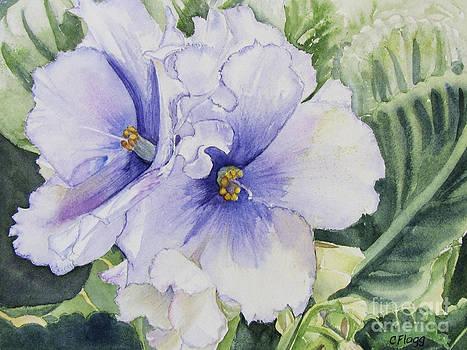 African Violet by Carol Flagg