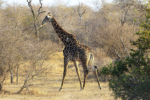 African Wildlife 0024 by Larry Roberson