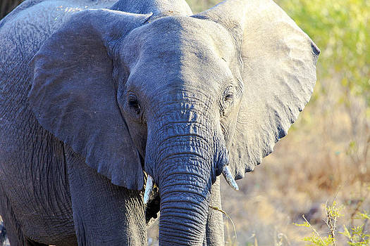 African Wildlife 0091 by Larry Roberson