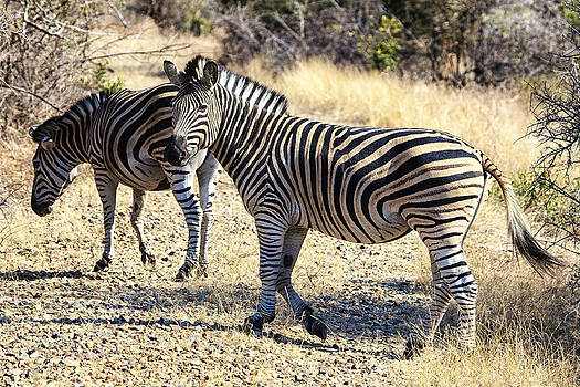 African WIldlife 0102 by Larry Roberson