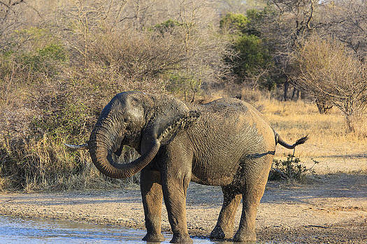 African Wildlife 0118 by Larry Roberson