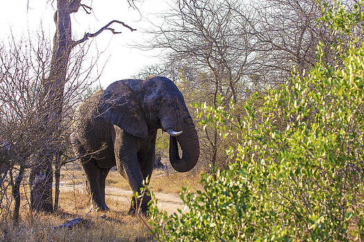 African Wildlife 0123 by Larry Roberson
