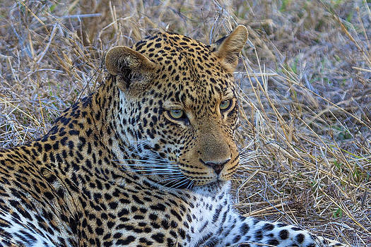 African Wildlife 0163 by Larry Roberson