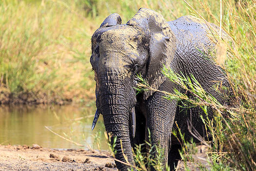 African Wildlife by Larry Roberson