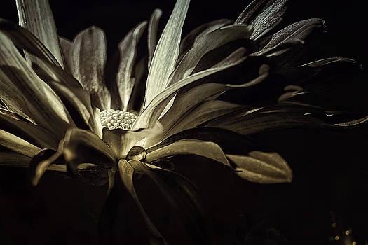 After Midnight by Darlene Kwiatkowski