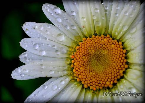 After the rain by Terri K Designs