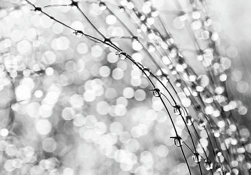 After The Rain by Theresa Tahara