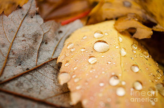 After the Rain by Tiffany Rantanen