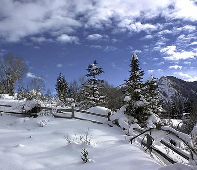 Kim Hojnacki - After the Snow