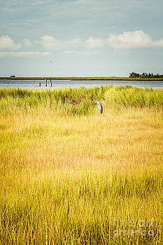 Lisa McStamp - Afternoon in the Marsh
