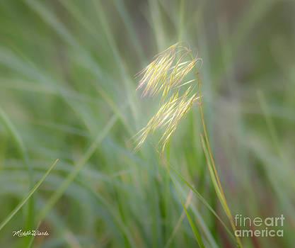 Michelle Wiarda - Afternoon Light
