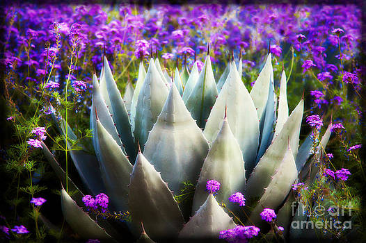 Agave Sails Verbena Sea by Jeanette Brown