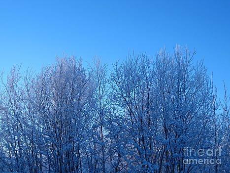 Alaska Sunrise Lighting Willows In Winter by Elizabeth Stedman