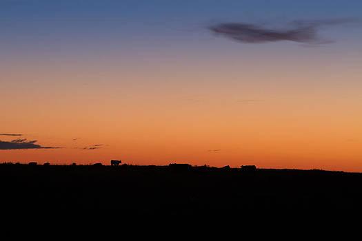 Alberta Morning Hours  by Maik Tondeur