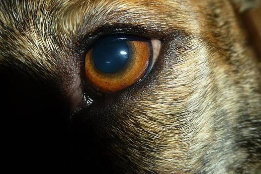 Alert Eyes by Montana Wilson