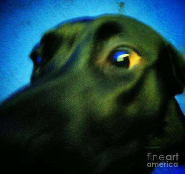 Alex Has A Dog by Jackie Bodnar