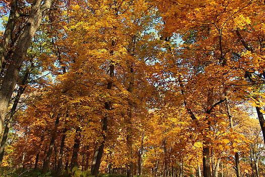 Rosanne Jordan - All Aglow Autumn
