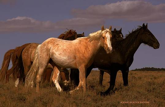 All The Pretty Horses  by Jeanne  Bencich-Nations
