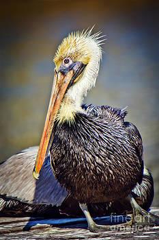 All Wet Pelican by Joan McCool