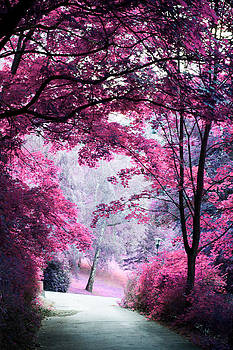 Jenny Rainbow - Alley through Pink Woods